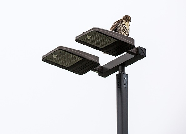 The Falcon has Landed on a LightMart LED Pole Kit